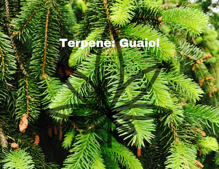Hemp Terpene and It's Effect: Guaiol